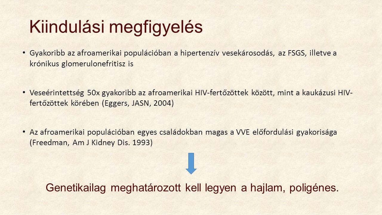 Miért? GWAS (genome wide association study) Mely kromoszóma-régió lehet felelős ezen különbségért?