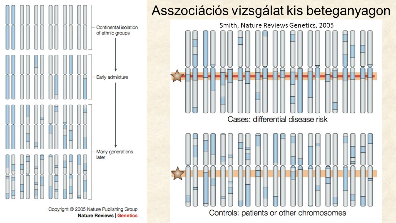 Asszociációs vizsgálat kis beteganyagon Smith, Nature Reviews Genetics, 2005