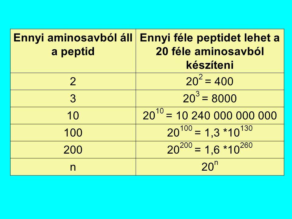 Ennyi aminosavból áll a peptid Ennyi féle peptidet lehet a 20 féle aminosavból készíteni 220 2 = 400 320 3 = 8000 1020 10 = 10 240 000 000 000 10020 1