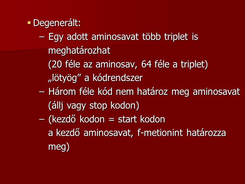""" Degenerált: – Egy adott aminosavat több triplet is meghatározhat meghatározhat (20 féle az aminosav, 64 féle a triplet) (20 féle az aminosav, 64 féle a triplet) """"lötyög a kódrendszer """"lötyög a kódrendszer – Három féle kód nem határoz meg aminosavat (állj vagy stop kodon) (állj vagy stop kodon) – (kezdő kodon = start kodon a kezdő aminosavat, f-metionint határozza a kezdő aminosavat, f-metionint határozza meg) meg)"""