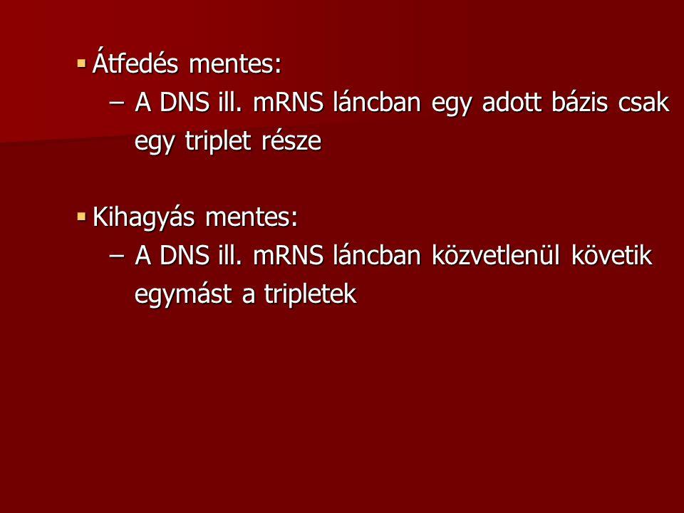  Átfedés mentes: – A DNS ill.