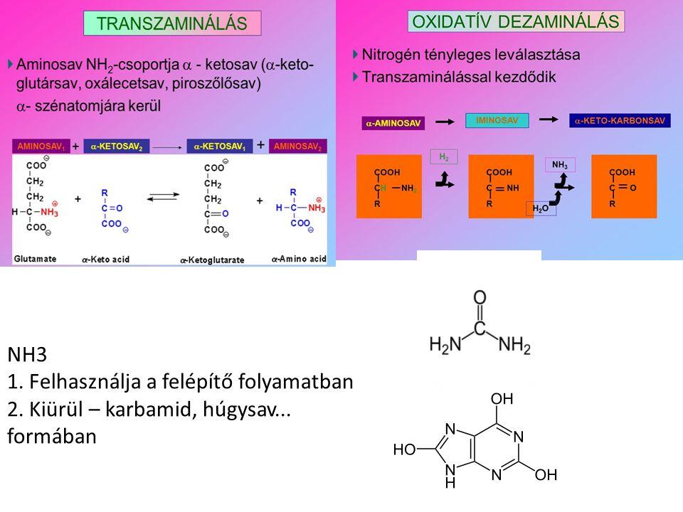 Az aminosav C-lánc a glükózbontáshoz kapcsolódik