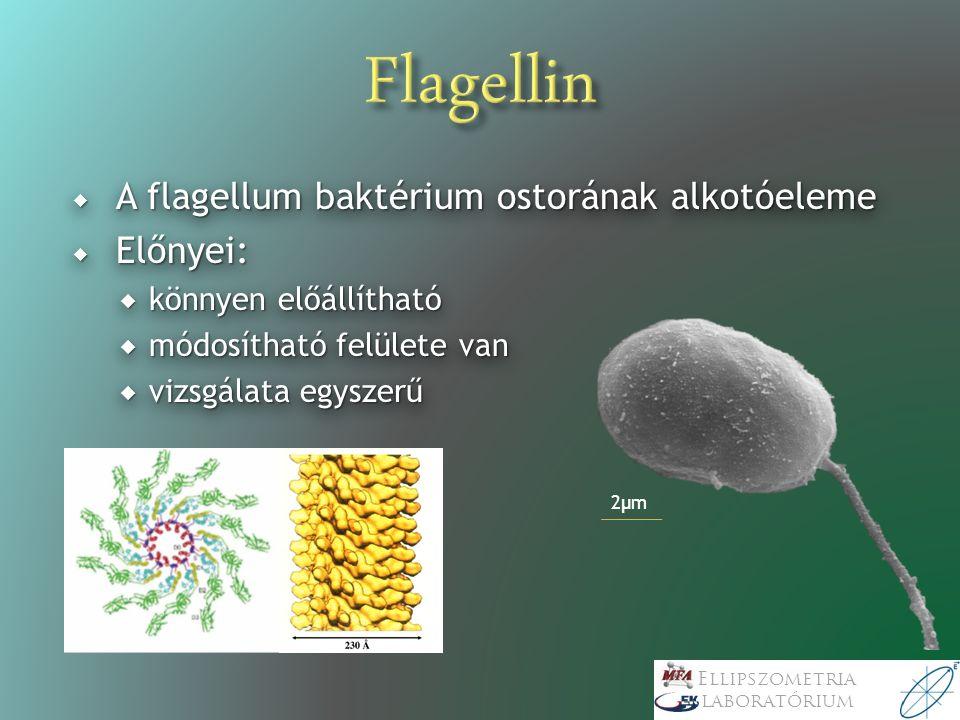 Ellipszometria laboratórium Első mérés  Glicerin oldat készítése, a folyadékcella és egyéb eszközök oxigén plazmás tisztítása  Víz, majd glicerin oldat áramoltatása és mérése 1,354 1,324 10 % glicerin oldat víz
