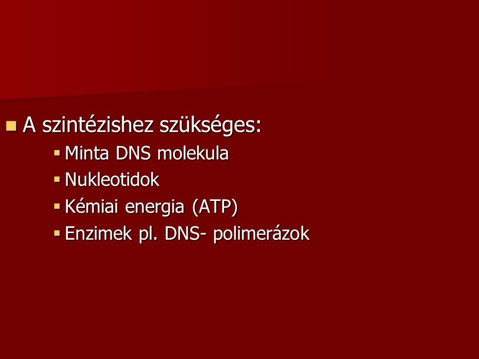 A szintézishez szükséges: A szintézishez szükséges:  Minta DNS molekula  Nukleotidok  Kémiai energia (ATP)  Enzimek pl. DNS- polimerázok
