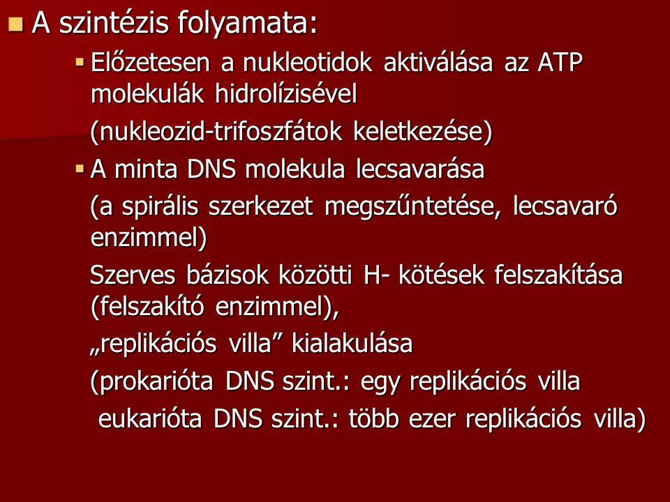 A szintézis folyamata: A szintézis folyamata:  Előzetesen a nukleotidok aktiválása az ATP molekulák hidrolízisével (nukleozid-trifoszfátok keletkezés