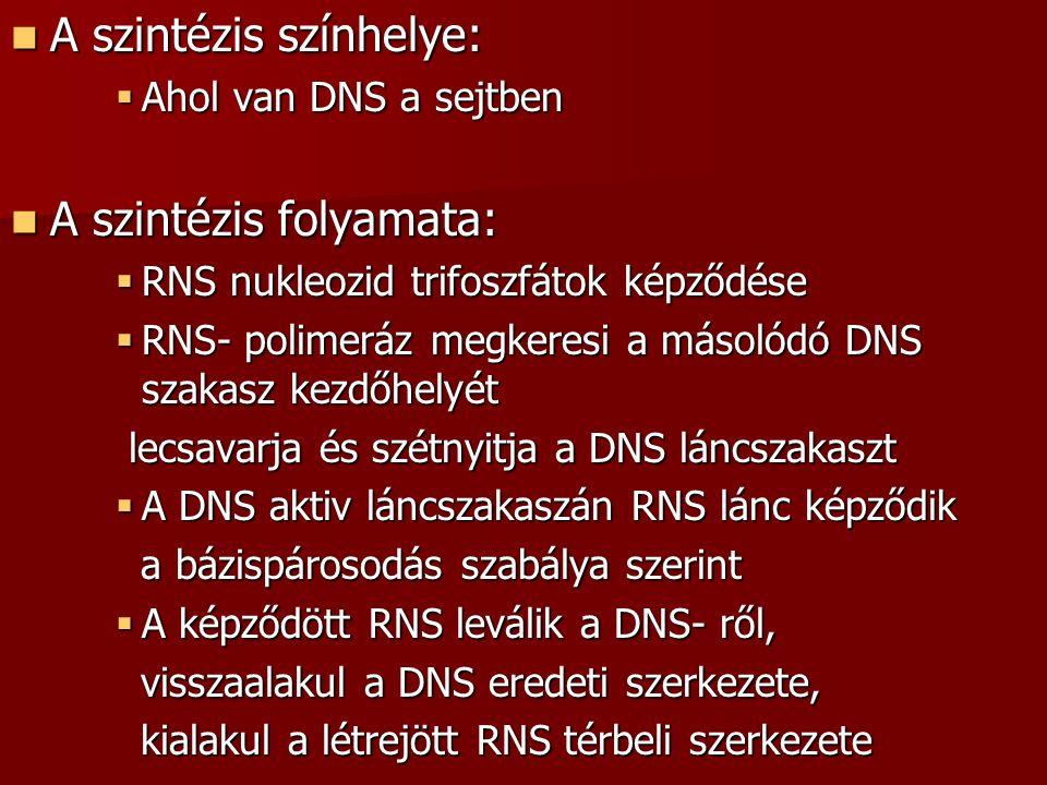 A szintézis színhelye: A szintézis színhelye:  Ahol van DNS a sejtben A szintézis folyamata: A szintézis folyamata:  RNS nukleozid trifoszfátok képz