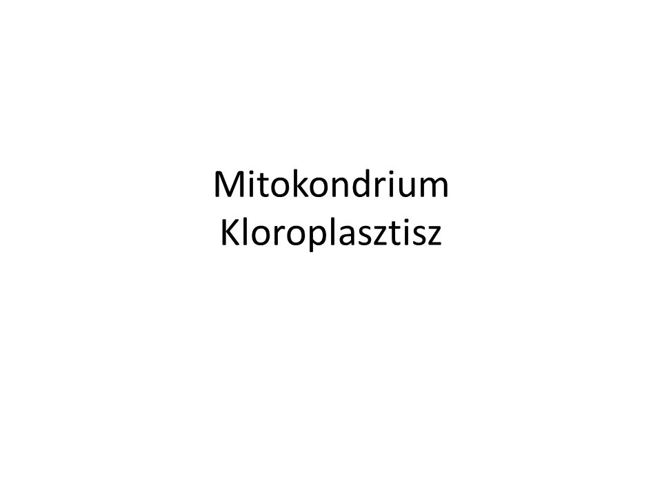 Mitokondrium Kloroplasztisz