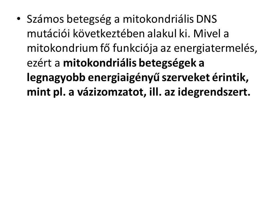 Számos betegség a mitokondriális DNS mutációi következtében alakul ki.
