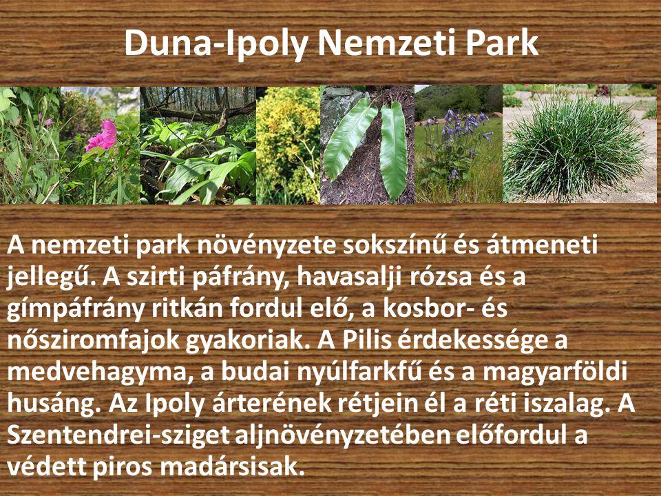 Duna-Ipoly Nemzeti Park A nemzeti park növényzete sokszínű és átmeneti jellegű. A szirti páfrány, havasalji rózsa és a gímpáfrány ritkán fordul elő, a
