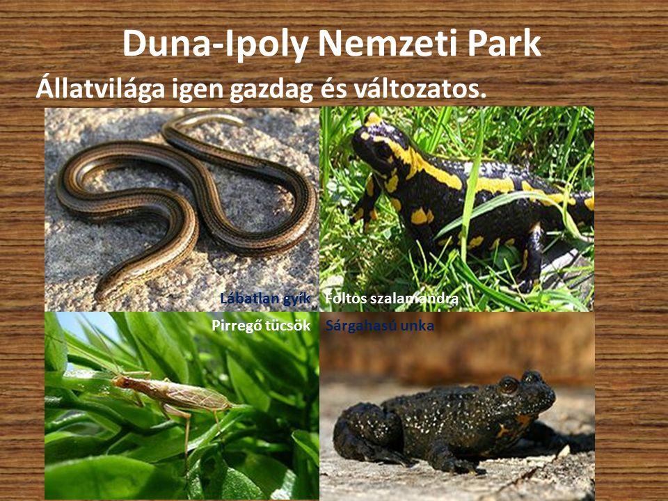 Duna-Ipoly Nemzeti Park Állatvilága igen gazdag és változatos. Lábatlan gyík Pirregő tücsök Foltos szalamandra Sárgahasú unka