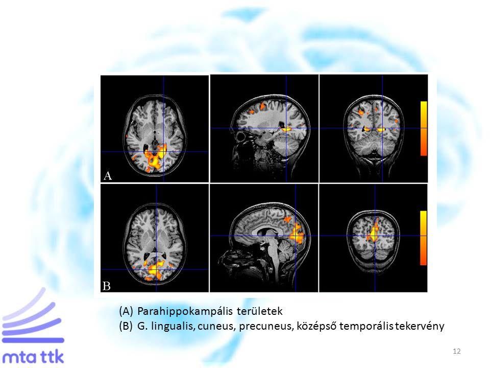 12 (A)Parahippokampális területek (B)G. lingualis, cuneus, precuneus, középső temporális tekervény