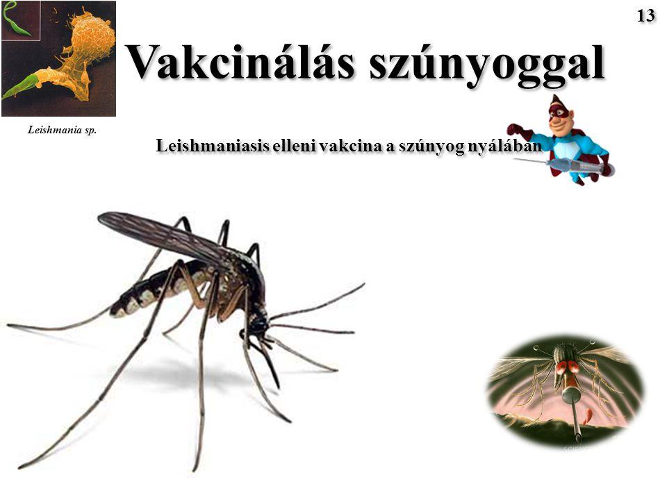Vakcinálás szúnyoggal Leishmaniasis elleni vakcina a szúnyog nyálában Leishmania sp. 13