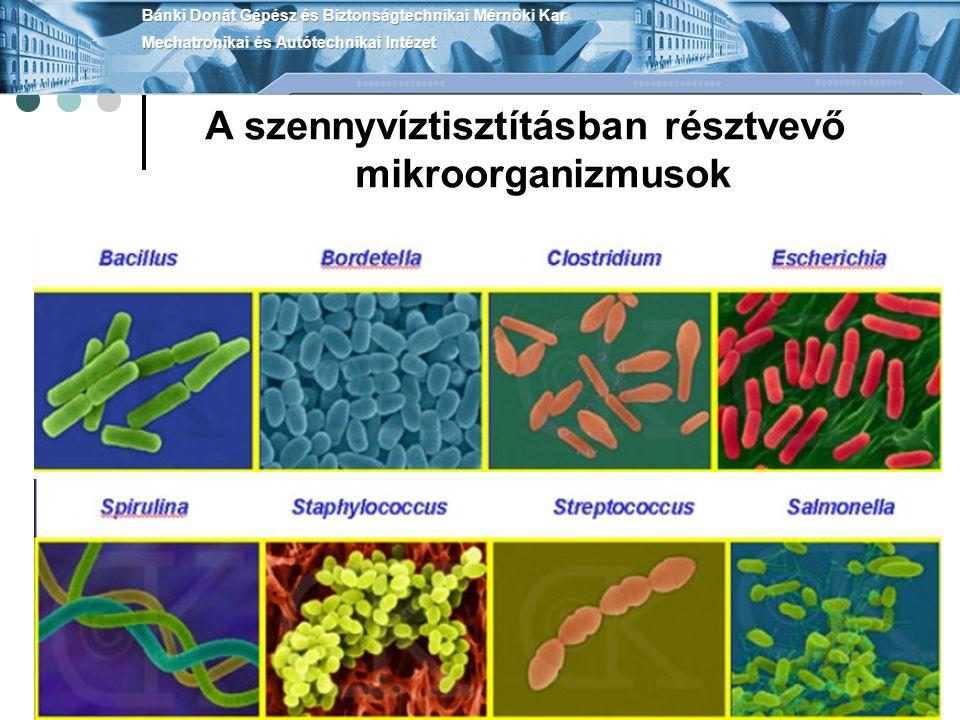 A szennyvíztisztításban résztvevő mikroorganizmusok