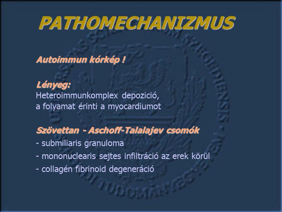Hajlamosító alapbetegségek  Rheumás vitiumok – AoS, AoI, MS, MI  Congenitális vitiumok – AoS, CoAo, VSD, DAP, Fallot kór  Marfan syndroma – AoI, mitr.