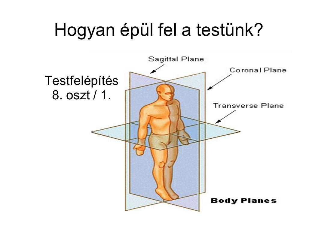 Hogyan épül fel a testünk Testfelépítés 8. oszt / 1.