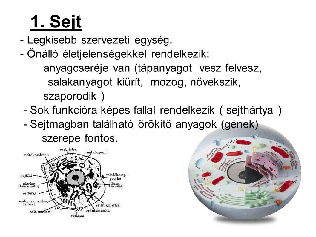 1. Sejt - Legkisebb szervezeti egység.