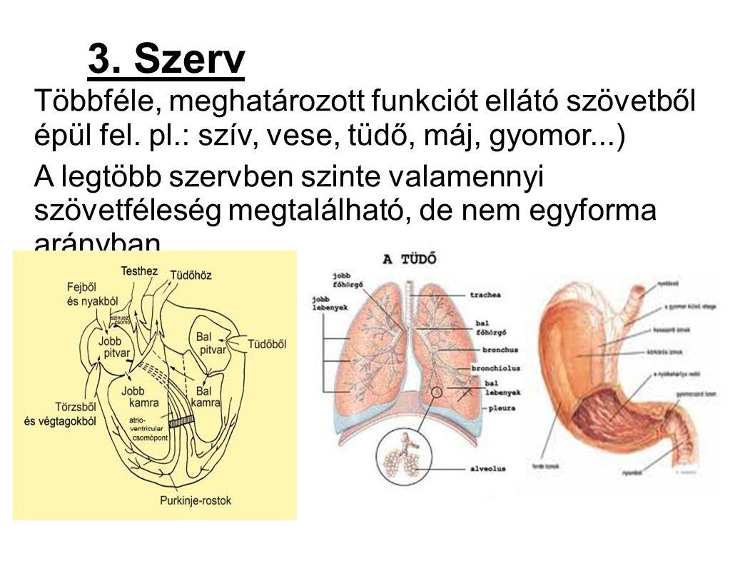 Egy bizonyos funkció (légzés, keringés stb.) zavartalan ellátására csoportosuló szervek összessége.