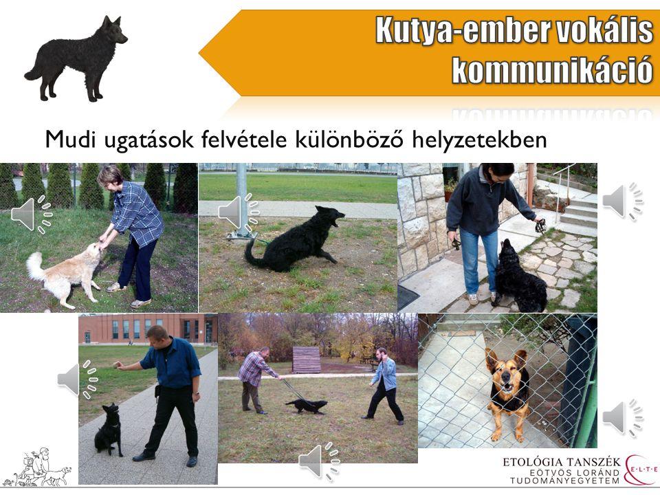 Családi Kutya Program (1994-től) A családi kutyákra jellemző az ugató viselkedés – feltehetően összefügg a háziasítással Kérdés: Vajon az ugatásnak van-e kommunikatív szerepe a kutya-ember interakcióban.