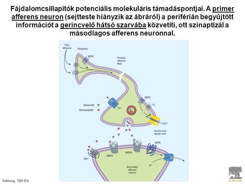 Fájdalomcsillapítók potenciális molekuláris támadáspontjai. A primer afferens neuron (sejtteste hiányzik az ábráról) a periférián begyűjtött informáci