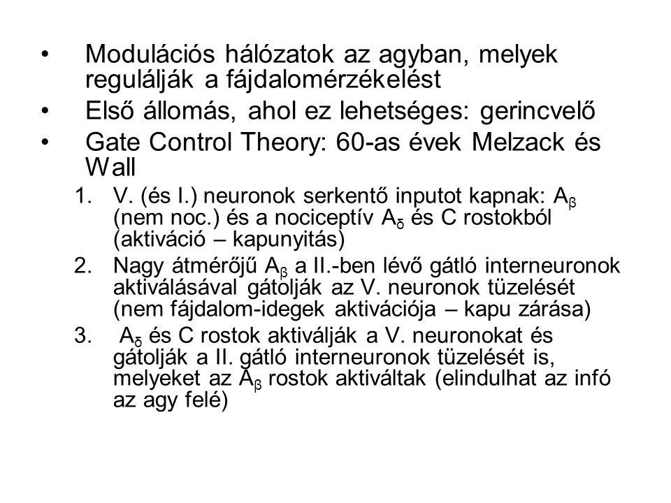 Modulációs hálózatok az agyban, melyek regulálják a fájdalomérzékelést Első állomás, ahol ez lehetséges: gerincvelő Gate Control Theory: 60-as évek Melzack és Wall 1.V.