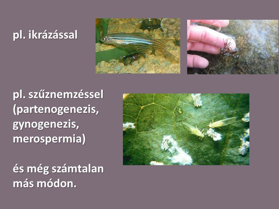 pl. ikrázással pl. szűznemzéssel (partenogenezis, gynogenezis, merospermia) és még számtalan más módon.