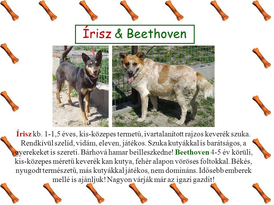 Írisz & Beethoven Írisz kb. 1-1,5 éves, kis-közepes termetű, ivartalanított rajzos keverék szuka.