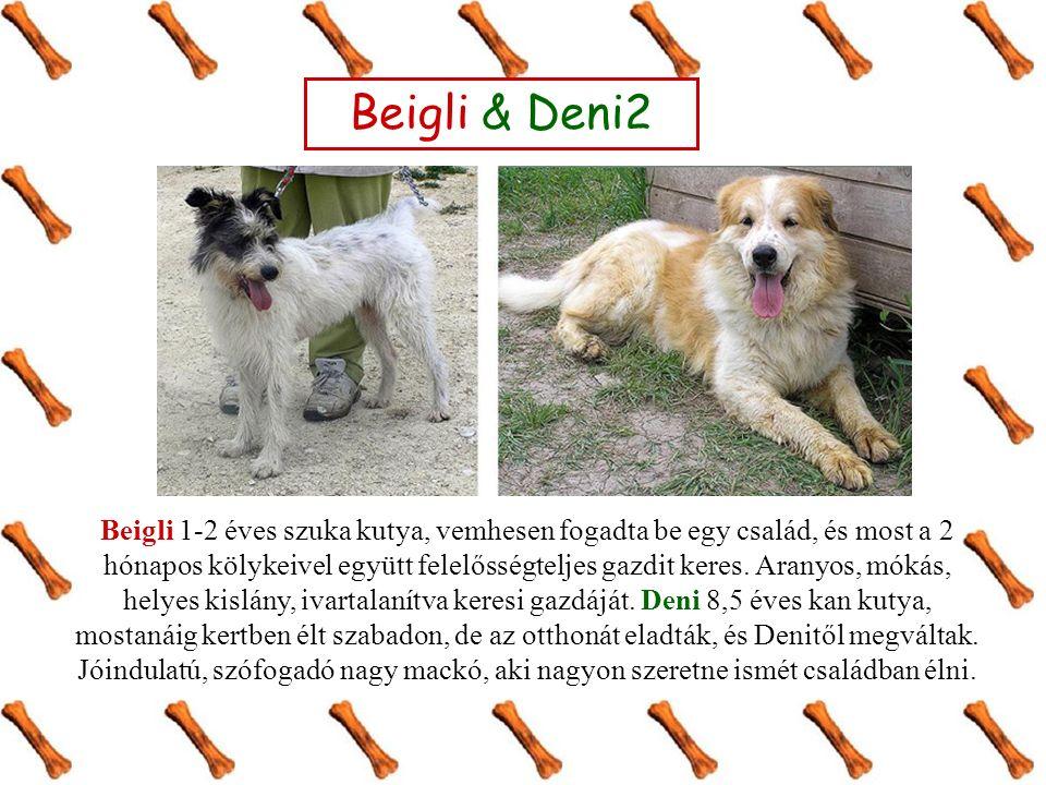 Beigli 1-2 éves szuka kutya, vemhesen fogadta be egy család, és most a 2 hónapos kölykeivel együtt felelősségteljes gazdit keres.