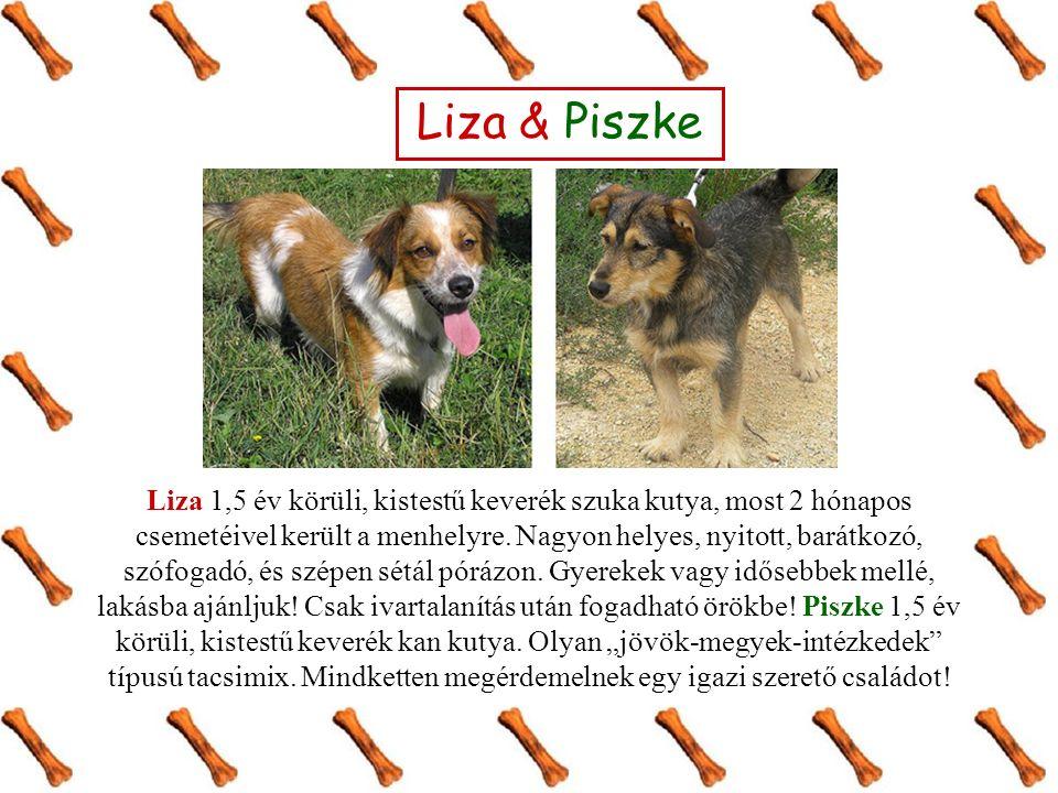 Liza & Piszke Liza 1,5 év körüli, kistestű keverék szuka kutya, most 2 hónapos csemetéivel került a menhelyre.