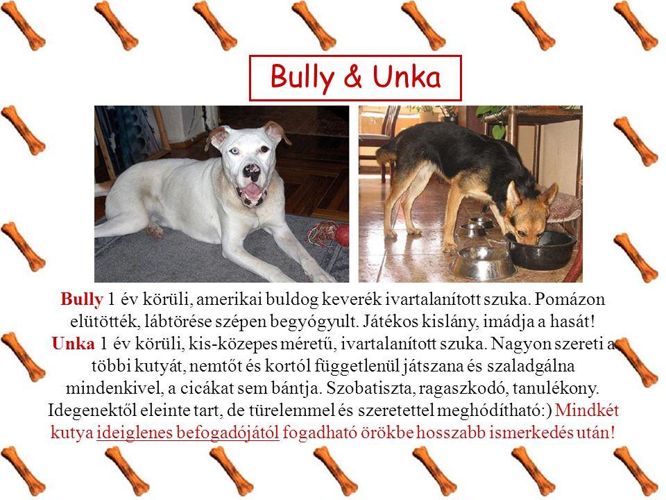 Bully & Unka Bully 1 év körüli, amerikai buldog keverék ivartalanított szuka.