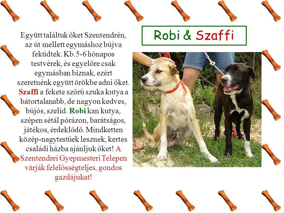 Robi & Szaffi Együtt találtuk őket Szentendrén, az út mellett egymáshoz bújva feküdtek.