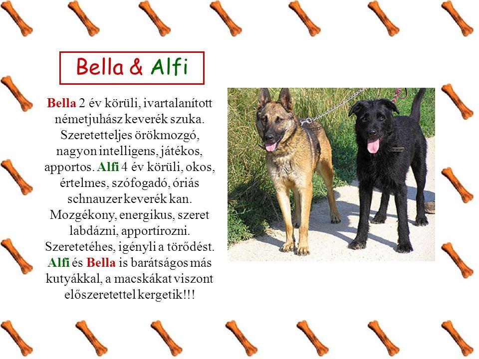 Bella & Alfi Bella 2 év körüli, ivartalanított németjuhász keverék szuka.