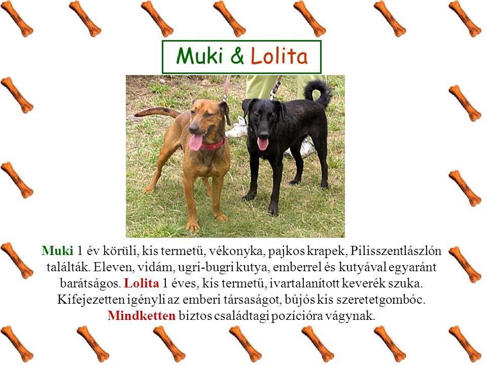 Muki & Lolita Muki 1 év körüli, kis termetű, vékonyka, pajkos krapek, Pilisszentlászlón találták.