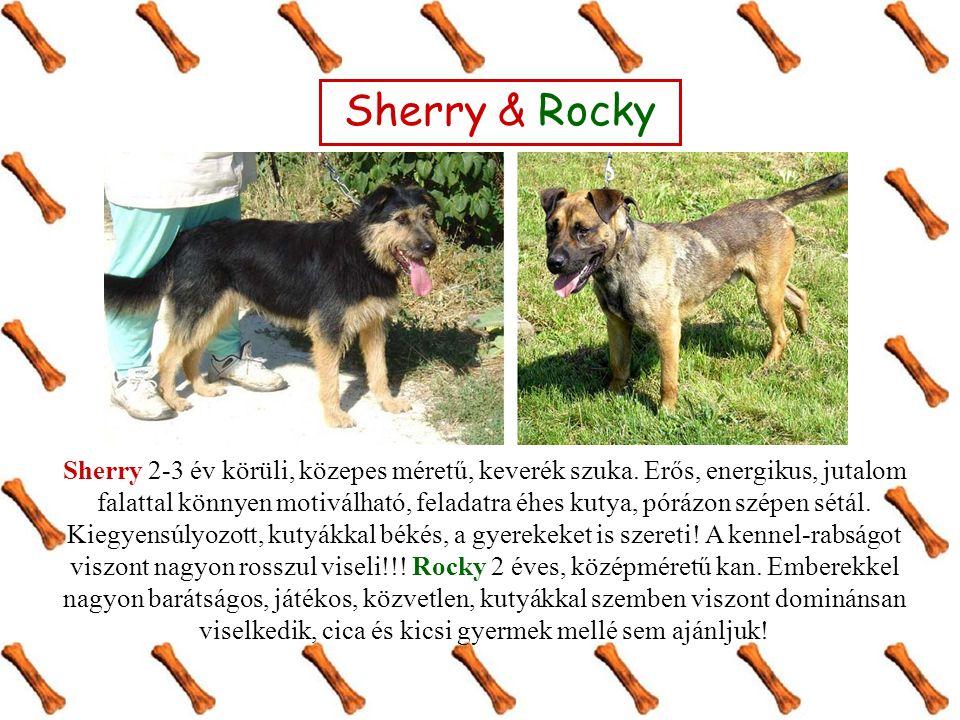 Sherry 2-3 év körüli, közepes méretű, keverék szuka.