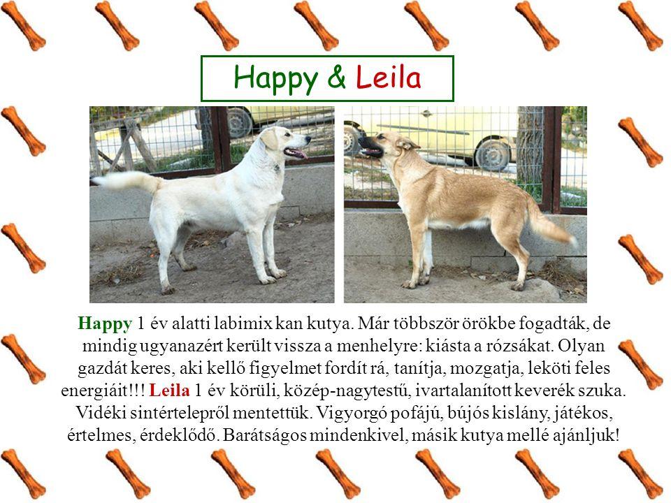 Happy & Leila Happy 1 év alatti labimix kan kutya.
