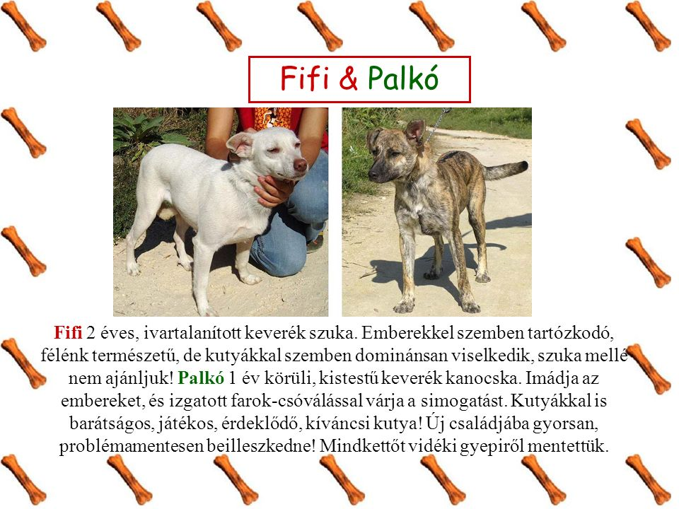 Fifi & Palkó Fifi 2 éves, ivartalanított keverék szuka.