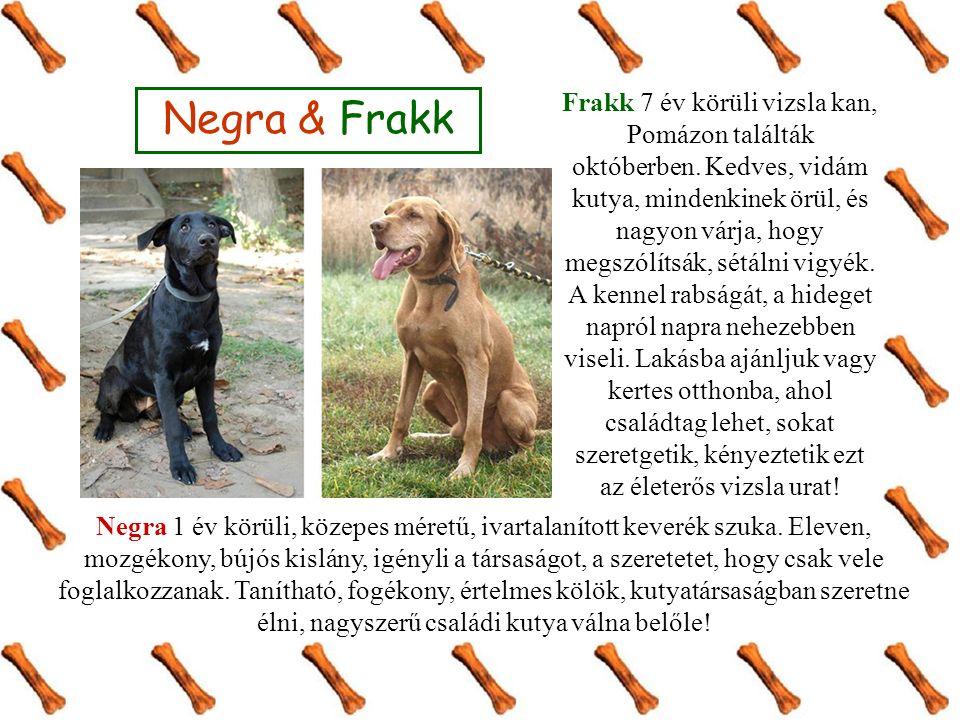Negra & Frakk Negra 1 év körüli, közepes méretű, ivartalanított keverék szuka.
