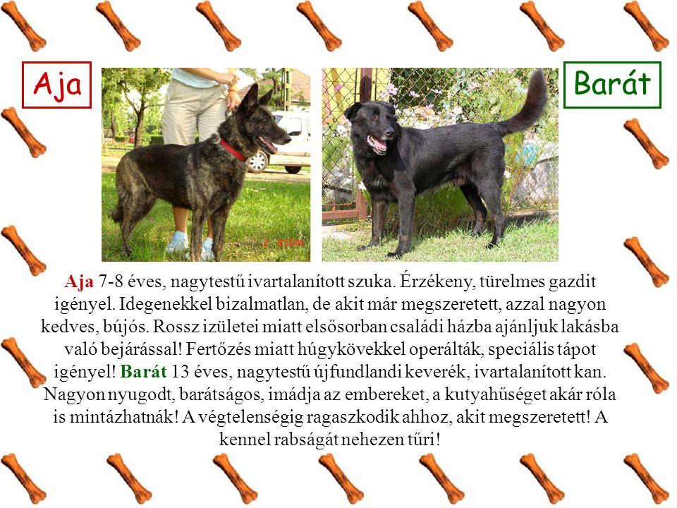 Mokka & Panna Mokka 1-2 éves, középméretű, labrador-dog keverék kan.