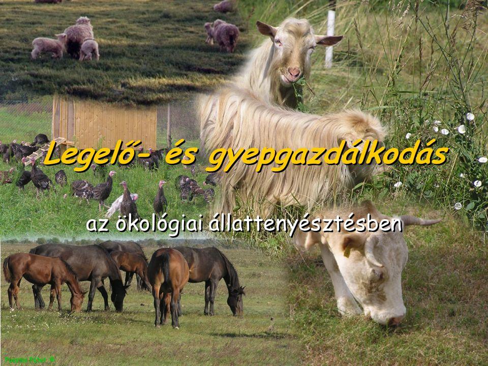 Pusztai Péter © Legelő- és gyepgazdálkodás az ökológiai állattenyésztésben