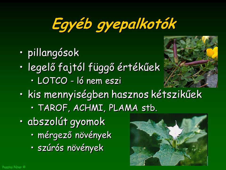 Pusztai Péter © Egyéb gyepalkotók pillangósok legelő fajtól függő értékűek LOTCO - ló nem eszi kis mennyiségben hasznos kétszikűek TAROF, ACHMI, PLAMA stb.