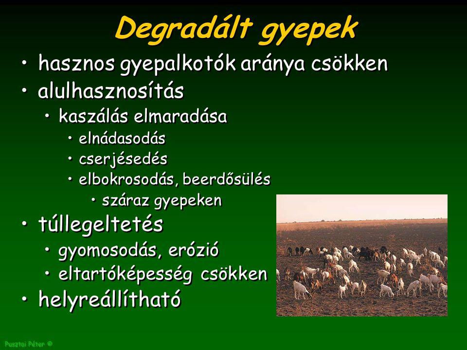 Pusztai Péter © Váltott legeltetés megfelelő állat létszám megfelelő termés megoszlás elgyomosodás túllegeltetés legelő erózióra való hajlamossá tétele talaj - növény - állat kölcsönhatás .