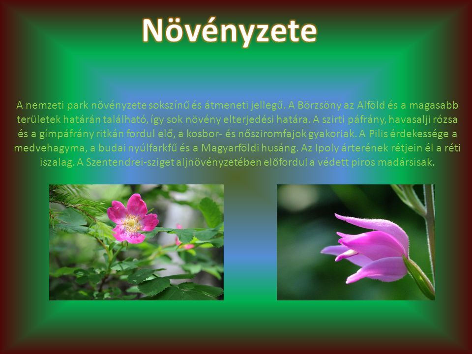 A nemzeti park növényzete sokszínű és átmeneti jellegű. A Börzsöny az Alföld és a magasabb területek határán található, így sok növény elterjedési hat