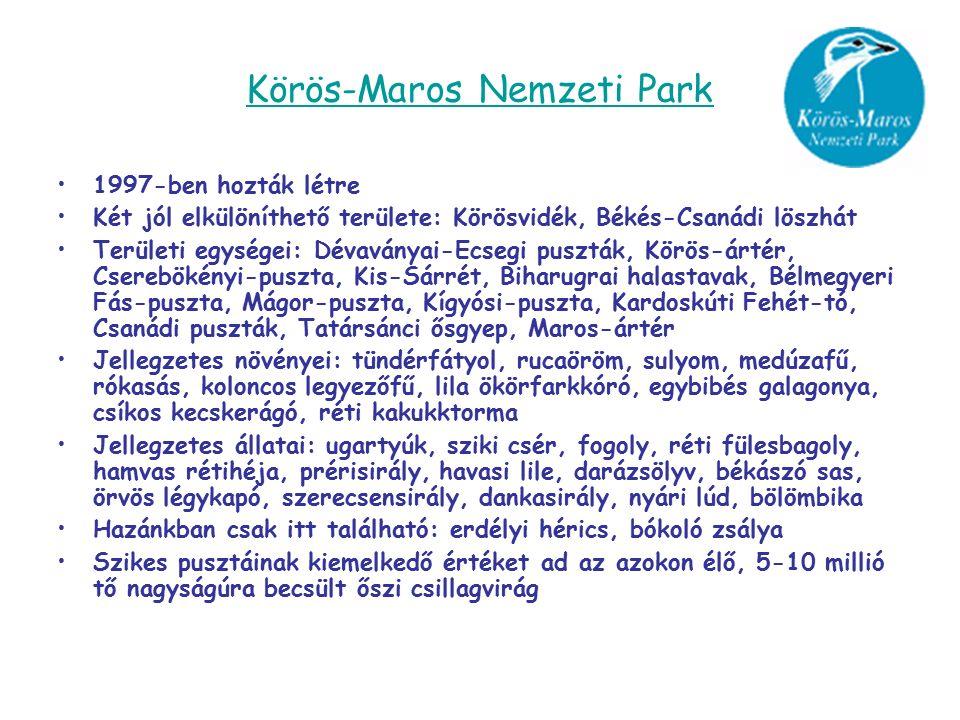Körös-Maros Nemzeti Park 1997-ben hozták létre Két jól elkülöníthető területe: Körösvidék, Békés-Csanádi löszhát Területi egységei: Dévaványai-Ecsegi puszták, Körös-ártér, Cserebökényi-puszta, Kis-Sárrét, Biharugrai halastavak, Bélmegyeri Fás-puszta, Mágor-puszta, Kígyósi-puszta, Kardoskúti Fehét-tó, Csanádi puszták, Tatársánci ősgyep, Maros-ártér Jellegzetes növényei: tündérfátyol, rucaöröm, sulyom, medúzafű, rókasás, koloncos legyezőfű, lila ökörfarkkóró, egybibés galagonya, csíkos kecskerágó, réti kakukktorma Jellegzetes állatai: ugartyúk, sziki csér, fogoly, réti fülesbagoly, hamvas rétihéja, prérisirály, havasi lile, darázsölyv, békászó sas, örvös légykapó, szerecsensirály, dankasirály, nyári lúd, bölömbika Hazánkban csak itt található: erdélyi hérics, bókoló zsálya Szikes pusztáinak kiemelkedő értéket ad az azokon élő, 5-10 millió tő nagyságúra becsült őszi csillagvirág