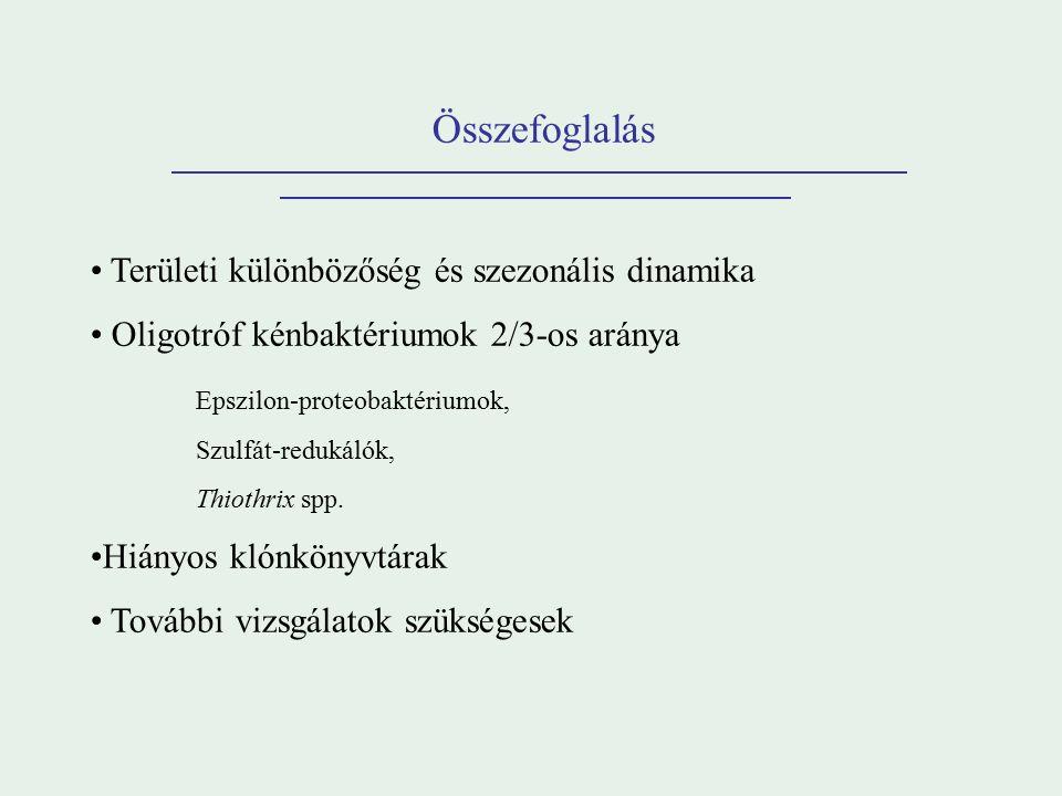 Összefoglalás Területi különbözőség és szezonális dinamika Oligotróf kénbaktériumok 2/3-os aránya Epszilon-proteobaktériumok, Szulfát-redukálók, Thiothrix spp.