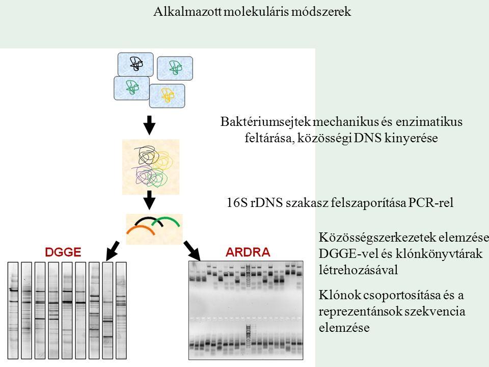 Baktériumsejtek mechanikus és enzimatikus feltárása, közösségi DNS kinyerése 16S rDNS szakasz felszaporítása PCR-rel Közösségszerkezetek elemzése DGGE-vel és klónkönyvtárak létrehozásával Klónok csoportosítása és a reprezentánsok szekvencia elemzése Alkalmazott molekuláris módszerek