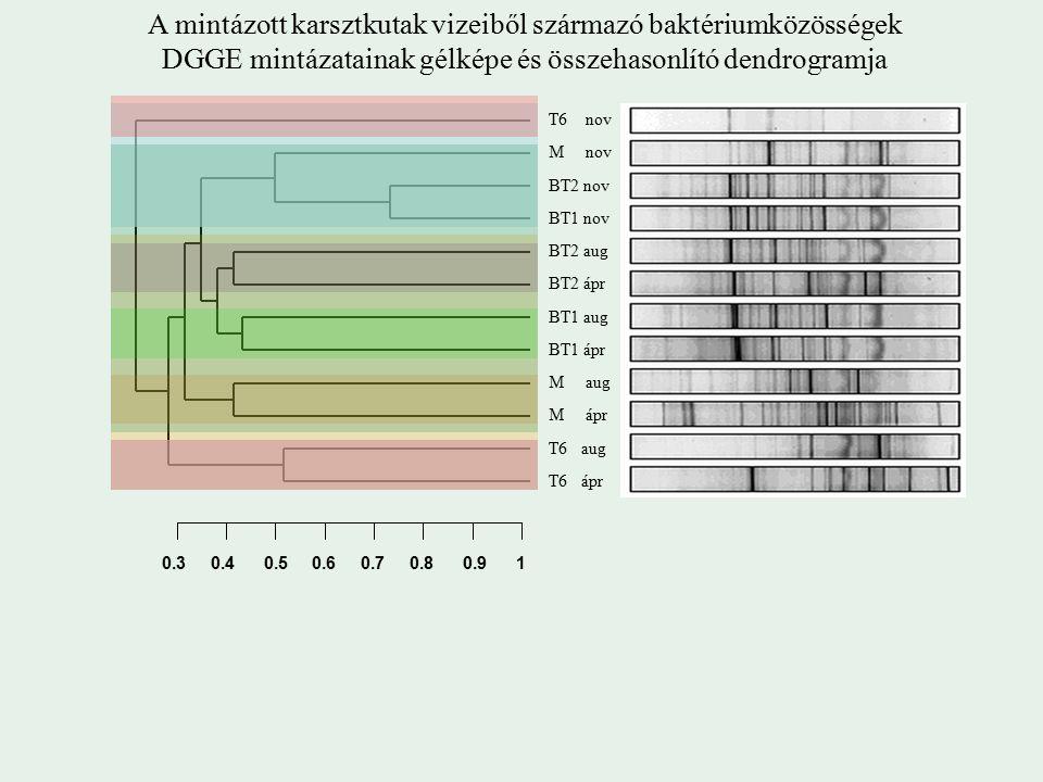0.3 0.4 0.5 0.6 0.7 0.8 0.9 1 A mintázott karsztkutak vizeiből származó baktériumközösségek DGGE mintázatainak gélképe és összehasonlító dendrogramja T6 nov M nov BT2 nov BT1 nov BT2 aug M aug BT1 ápr BT1 aug BT2 ápr T6 ápr T6 aug M ápr