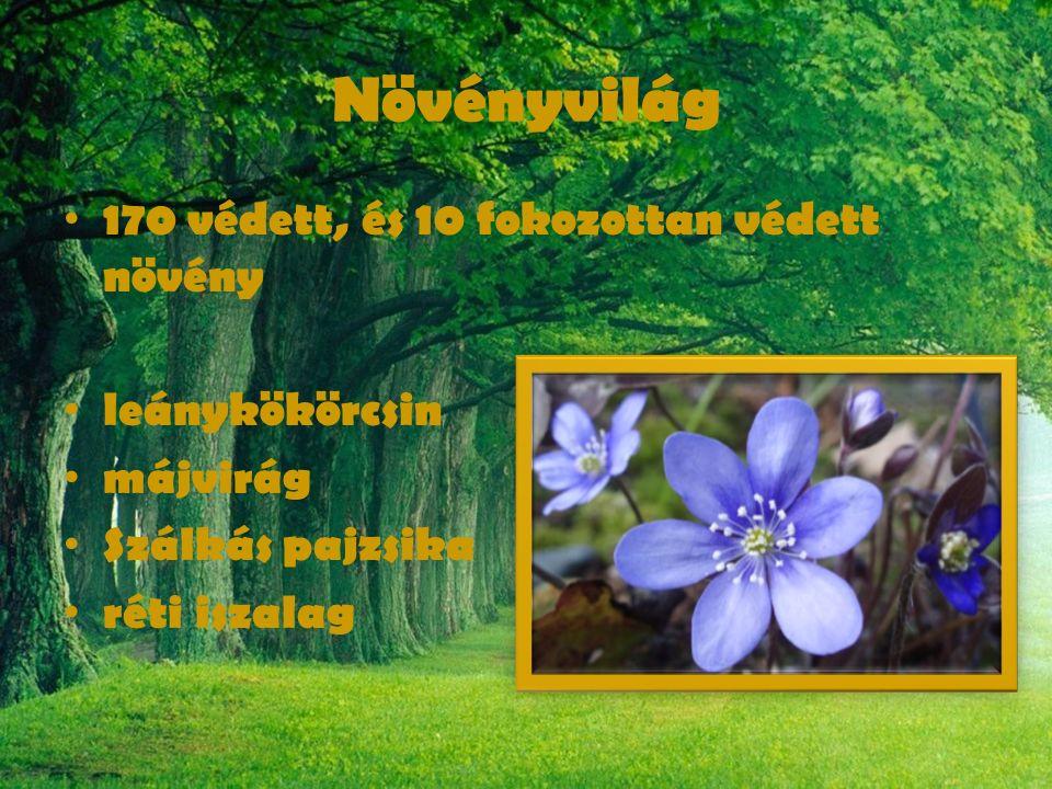 Növényvilág 170 védett, és 10 fokozottan védett növény leánykökörcsin májvirág Szálkás pajzsika réti iszalag