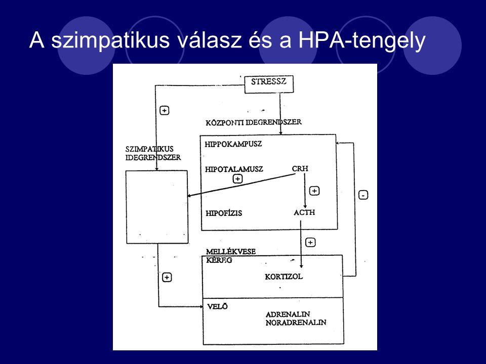 A szimpatikus válasz és a HPA-tengely