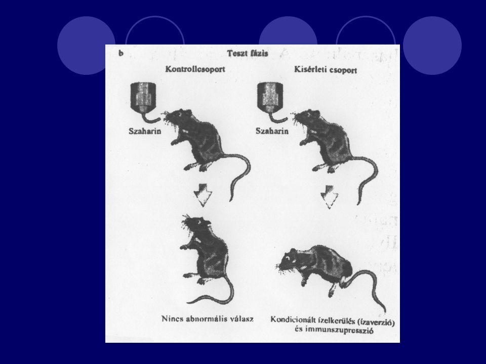 Az immunrendszer és az idegrendszer összefüggésének további felderítése Alexander: pszichoszomatikus betegségek Selye: az elhúzódó stressz hatása 1964 Ader elnevezése: psychoimmumology, 1981 PNI Solomon 31 pontja A pszichoneuroimmunológia a rendszerszemléletű megközelítés példája