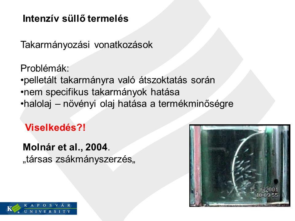 """Intenzív süllő termelés Molnár et al., 2004. """"társas zsákmányszerzés"""" Takarmányozási vonatkozások Problémák: pelletált takarmányra való átszoktatás so"""