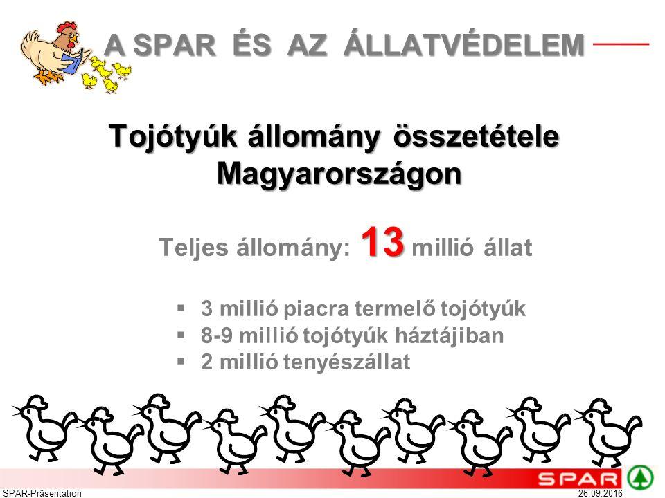 Tojótyúk állomány összetétele Magyarországon 26.09.2016SPAR-Präsentation 13 Teljes állomány: 13 millió állat  3 millió piacra termelő tojótyúk  8-9